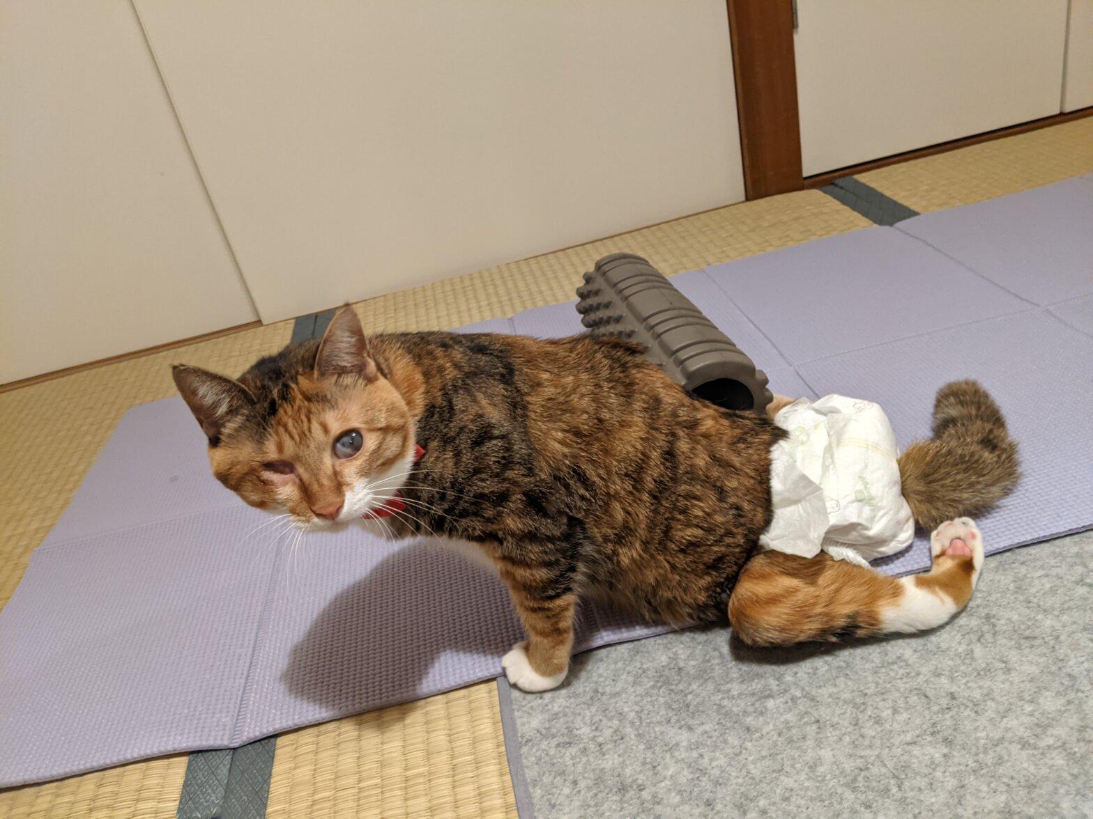 筋膜ローラーとヨガマットと猫